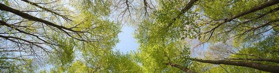 beautiful-forest-scene-bottom-view-of-tall-trees-NH6UZXS.jpg